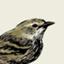 yairobird
