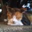 id:yama_roid