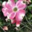 id:yamatomo_no-1