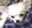 id:yamazo223