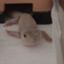 id:yamorimiyuki
