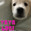 id:yaya_yayaya