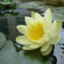 id:yokko0918flowers