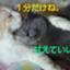id:yoko0081jun
