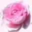 id:yoro-schon