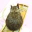 yoshimi_honest