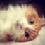 id:yu_rub_45