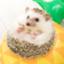 yuhei2261