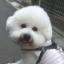 yuichi_alex