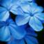 id:yuik1003
