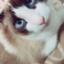 yuka-S