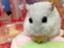 yuka_honjyou