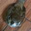id:yukamu