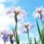 id:yukarin-12-11