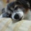 id:yukiharu-blog