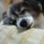 yukiharu-blog