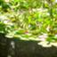 id:yukikitajp526