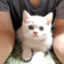 id:yukinaco