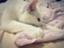 id:yume-hane