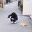 id:yurinabcd