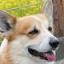 yuta_dog