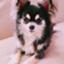 id:yuzu-pepper