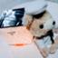 id:yuzuhana-785