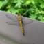 id:zoo_web