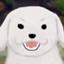 zuiji_zuisho
